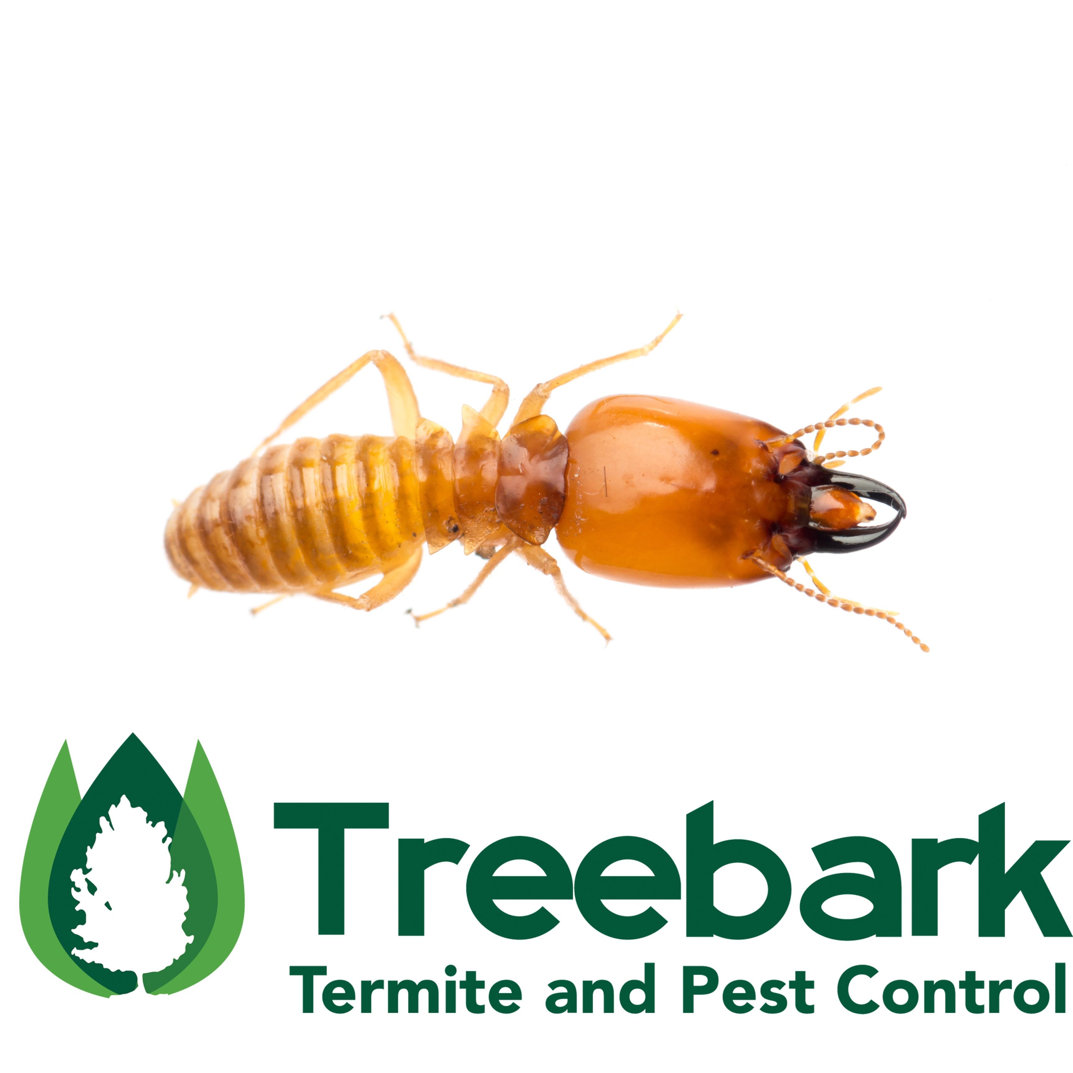 Termite Control Santa Ana