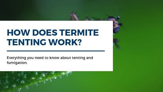 How does termite tenting work_