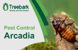 Pest-Control-Arcadia