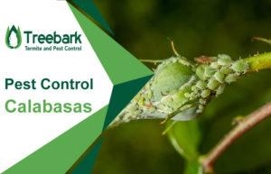 Pest-Control-Calabasas