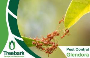 Pest-Control-Glendora