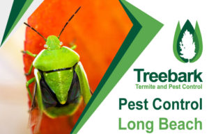 Pest-Control-Long-Beach