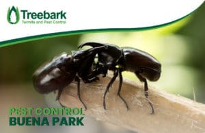 Pest-Control-buena-park