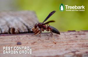 Pest-Control-garden-grove