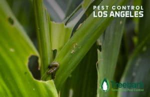 Pest-Control-los-angeles