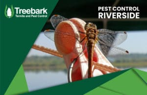 Pest-Control-riverside