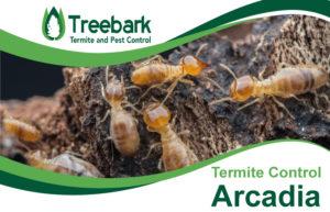 Termite-Control-Arcadia