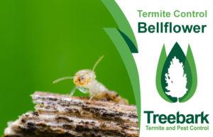 Termite-Control-Bellflower