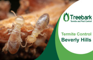 Termite-Control-Beverly-Hills