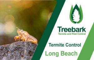 Termite-Control-Long-Beach