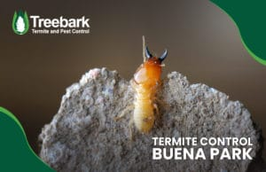 Termite-Control-buena-park