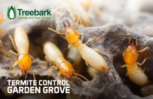 Termite-Control-garden-grove