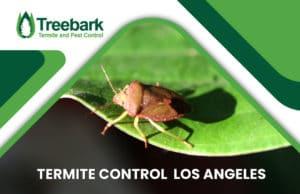 Termite-Control-los-angeles
