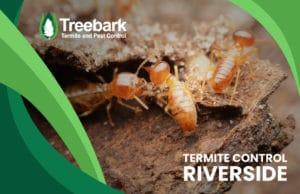 Termite-Control-riverside