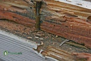 drywood-termites-branded