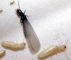 Subterranean Termite Control Orange County