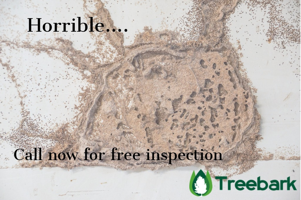 https://treebarktermiteandpestcontrol.com/termite-remediation-cost/