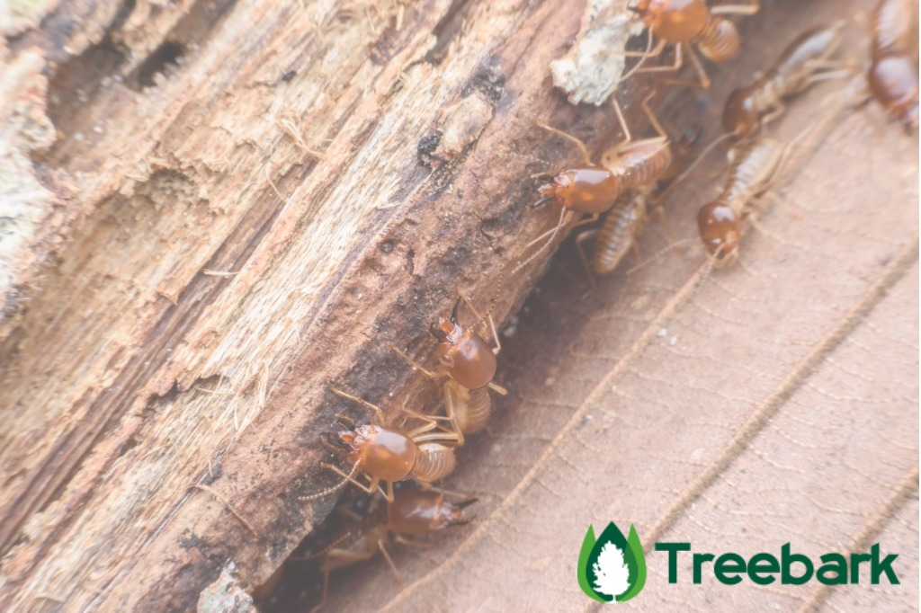 Effective Wood Treatment against Termites, All The Info ...