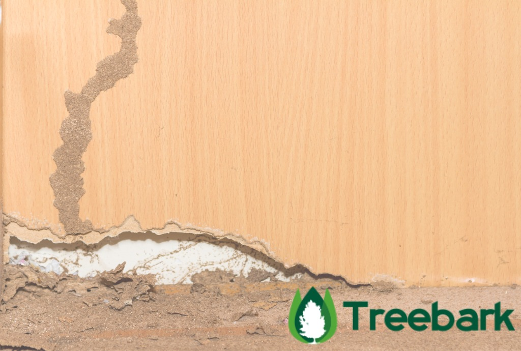 https://treebarktermiteandpestcontrol.com/treatment-subterranean-termites-heres-info-know/