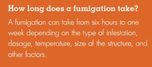 Fumigation for Termites Kills People