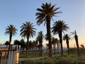 Termite Control Service in Palos Verdes
