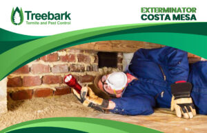 Termite Inspection Performed By an Exterminator in Costa Mesa