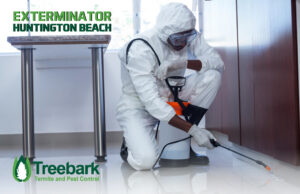 Exterminator Practicing Pest Control in A Kitchen in Huntington Beach