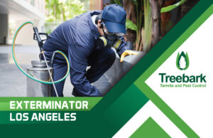 Exterminator Los Angeles treating for spiders