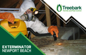 Gross Rat Poop from Exterminator Newport Beach vacuuming it up