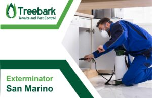 Exterminator Under The Sink For San Marino Pest Control