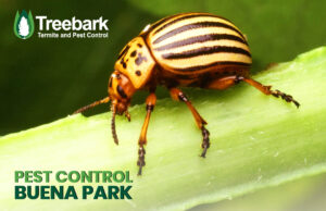 Bug on a stick With Treebark Logo and Pest Control Buena Park on it