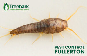 Silverfish in Fullerton needing Pest Control