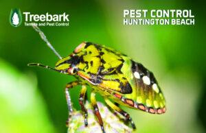 Bug Looking Mighty on a Leaf, Treebark Logo and Pest Control Huntington Beach on the image
