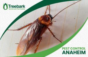A Cockroach with a Treebark Logo and Pest Control Anaheim