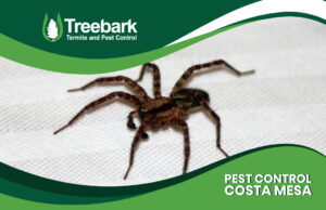 A Spider from Costa Mesa needing pest control
