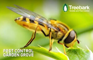We do not service bees. We are a Pest Control Company in Garden Grove. This is an insect we dont provide service for