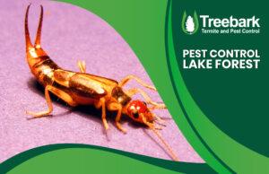 Pest Needing Control Lake Forest