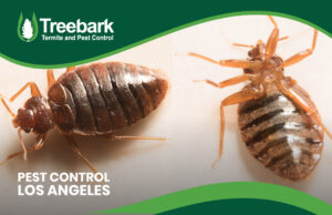 Bugs in Los Angeles needing controling Pests are not a joke