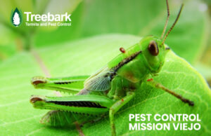 Mission Viejo Grasshopper Needing Pest Control Services
