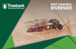 Mosquito Drinking Blood Pest Control Riverside Blasts on the image