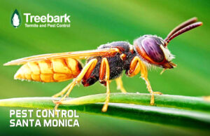 Flying INsect Needing Pest Control in Santa Monica