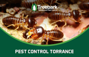 Termites Needing Pest Control Services