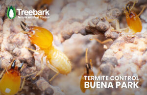 Termites eating wood with Treebark Logo and Termite Control Buena Park Written on it.