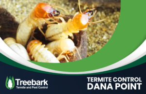 Termties eating with a treebark logo and termite control dana point