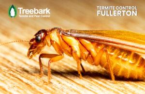 Termite needing Control in Fullerton CA