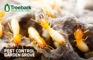 Termites Running a Muck in Garden Grove. Time For Termite Control