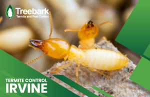Controlling Termites in Irvine is Easy call us