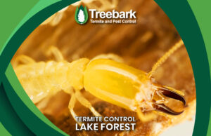Termite Needing Control In Lake Forest