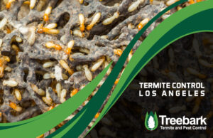 Termties in the wood running a muck in los angeles needing control