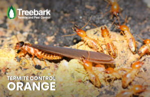 Termite Swarmer and Termites needing Control in Orange